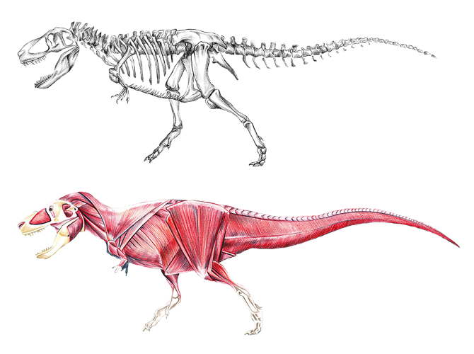 an overview and anatomy of triceratops hottidus in the world of dinnosaurs Anatomy overview anatomy is a this skill represents generalized knowledge that applies to all creatures in the world training anatomy dinosaur anatomy.
